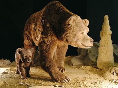 Dermoplastik einer Höhlenbärin mit ihrem Jungtier