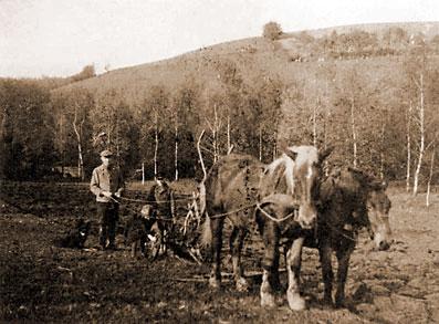 Der Volksgarten wurde 1945 für den Anbau von Kartoffeln und Gemüse umgepflügt